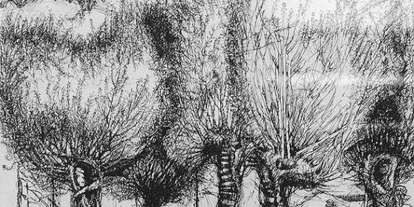 o.T. (Bäume am Ufer)