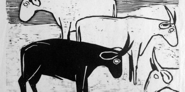 Stier und Kühe